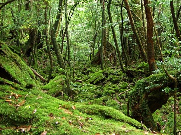 屋久島の画像 p1_21