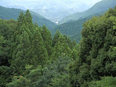 紀伊山地の霊場と参詣道の画像 p1_13